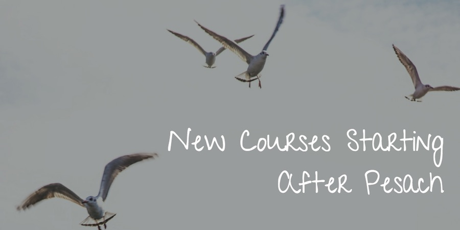 Seagulls as backdrop for text new courses starting after pesach